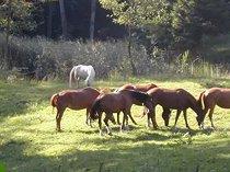 Suche Person zur Unterstützung bei Hufbeschlag von Pferden