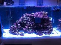 Meerwasseraquarium von Nyos