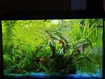 70 Liter Aquarium komplett eingerichtet