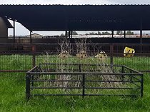Sheep-, pig-, chicken- & cattle farm