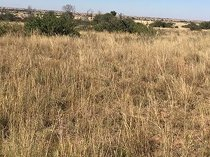 Vacant land / plot in kanana for sale