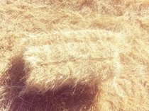 Square teff bales with seed for sale
