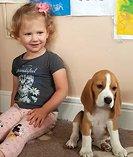 Beagle pups - kusa registered
