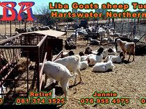 Need to buy or sell cattle goats and sheep?