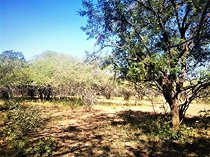 Vacant land / plot for sale in marloth park