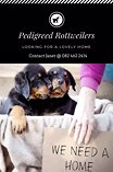 Pedigreed rottweiler pups