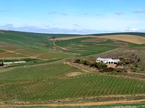 Share of 88 hectare wine farm for sale in greyton