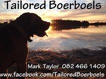 Pedigree boerboel puppies available