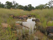 114 hectare lifestyle property for sale in Vaalwater